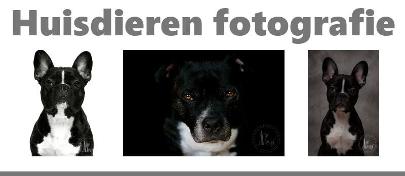 huisdieren fotoshoot aan huis in groningen